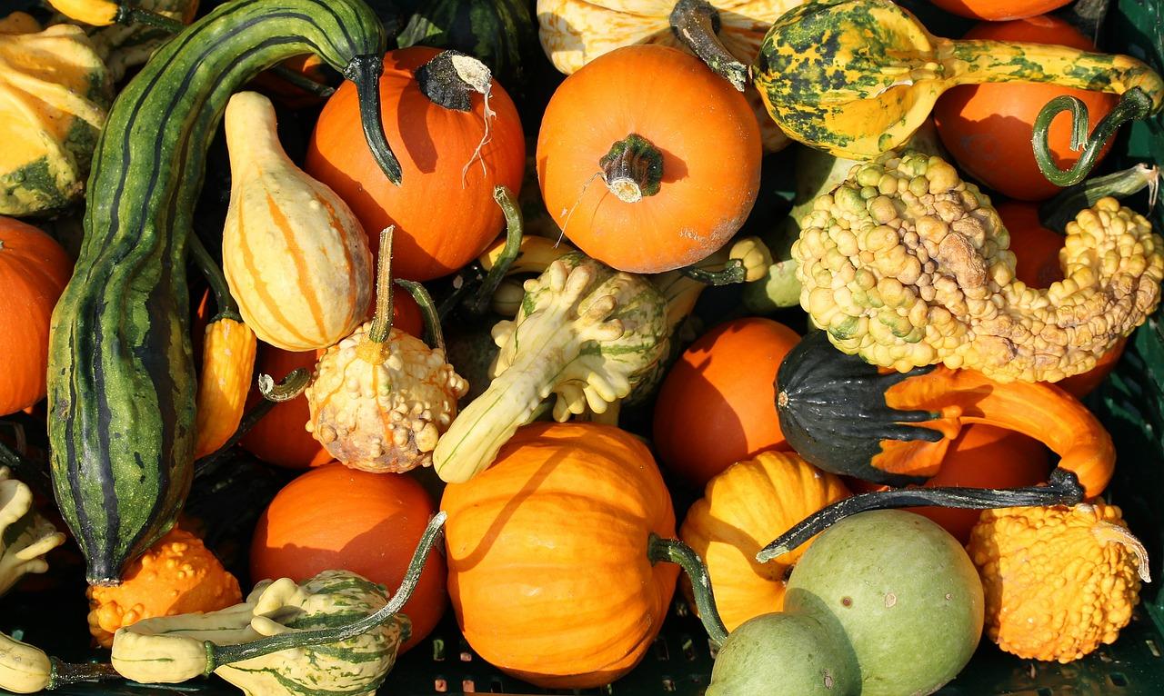 pumpkins-457715_1280